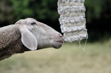 Laura Risch Up and Down, 2016 Wolle und Formgedächtnisdrähte Präsentation im Textildesign Foto: Thilo Steinert