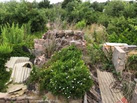 Verlassene Schrebergärten in Lettien, Sachsen-Anhalt
